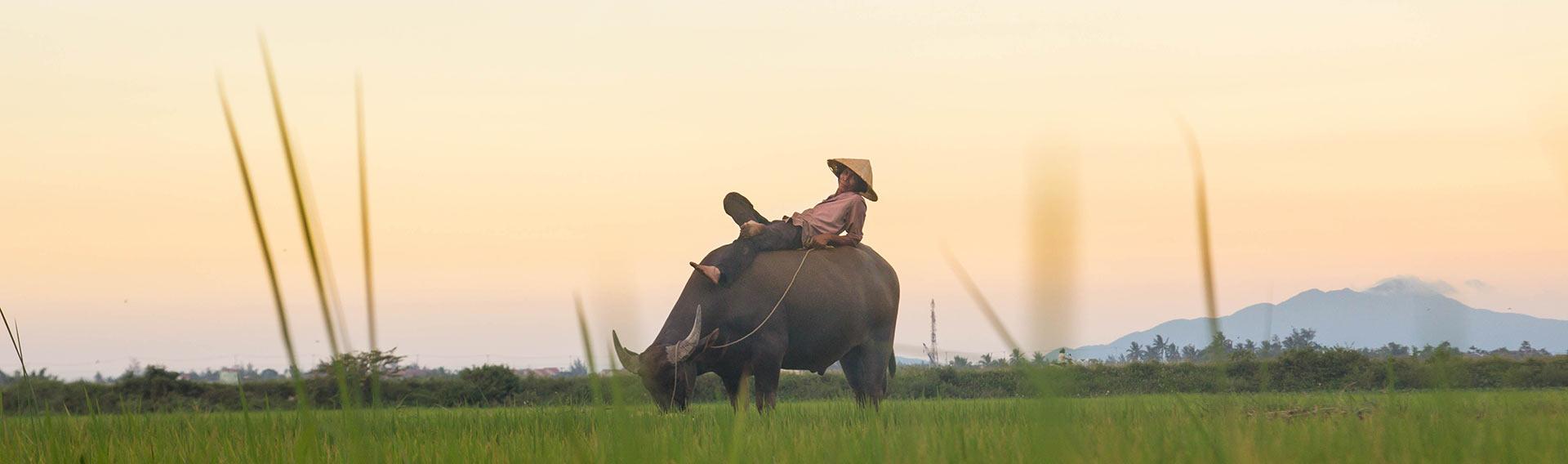 Vietnam, Paysages verts