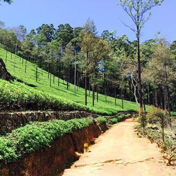 Suggestions d'itinéraires au Sri Lanka