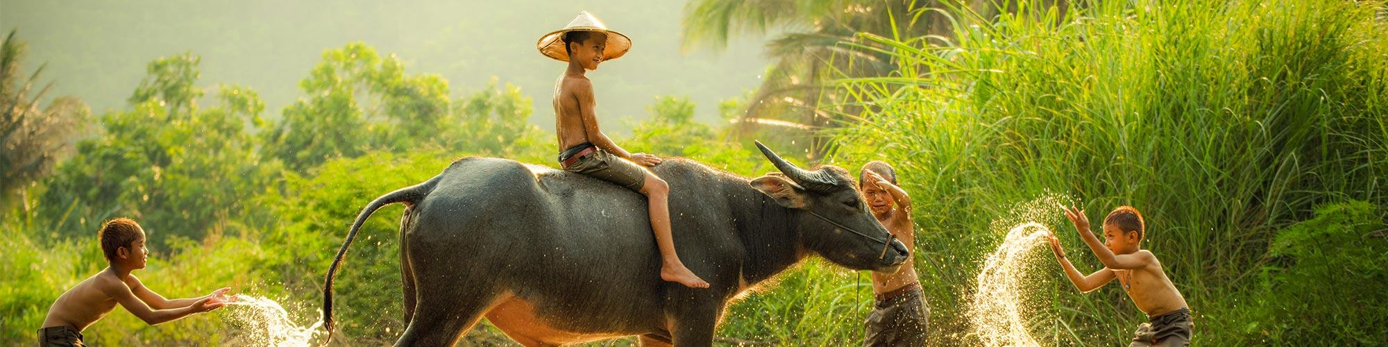 Vietnam, enfant avec buffle