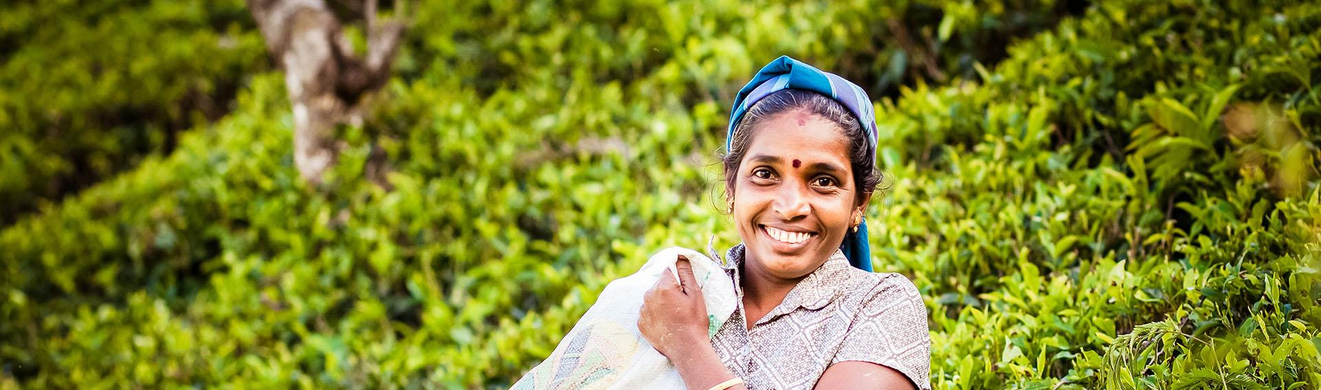 Sri Lanka, région montagneuse, cueilleuse de thé