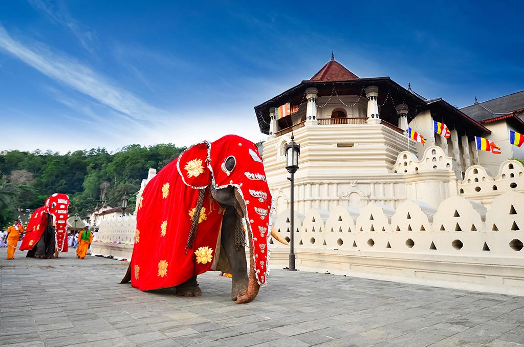 Visite du temple de la Dent de Kandy