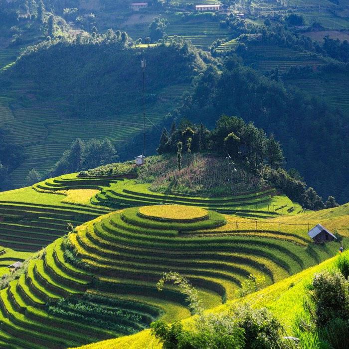 Vietnam, Mu Cang Chai, terrasses