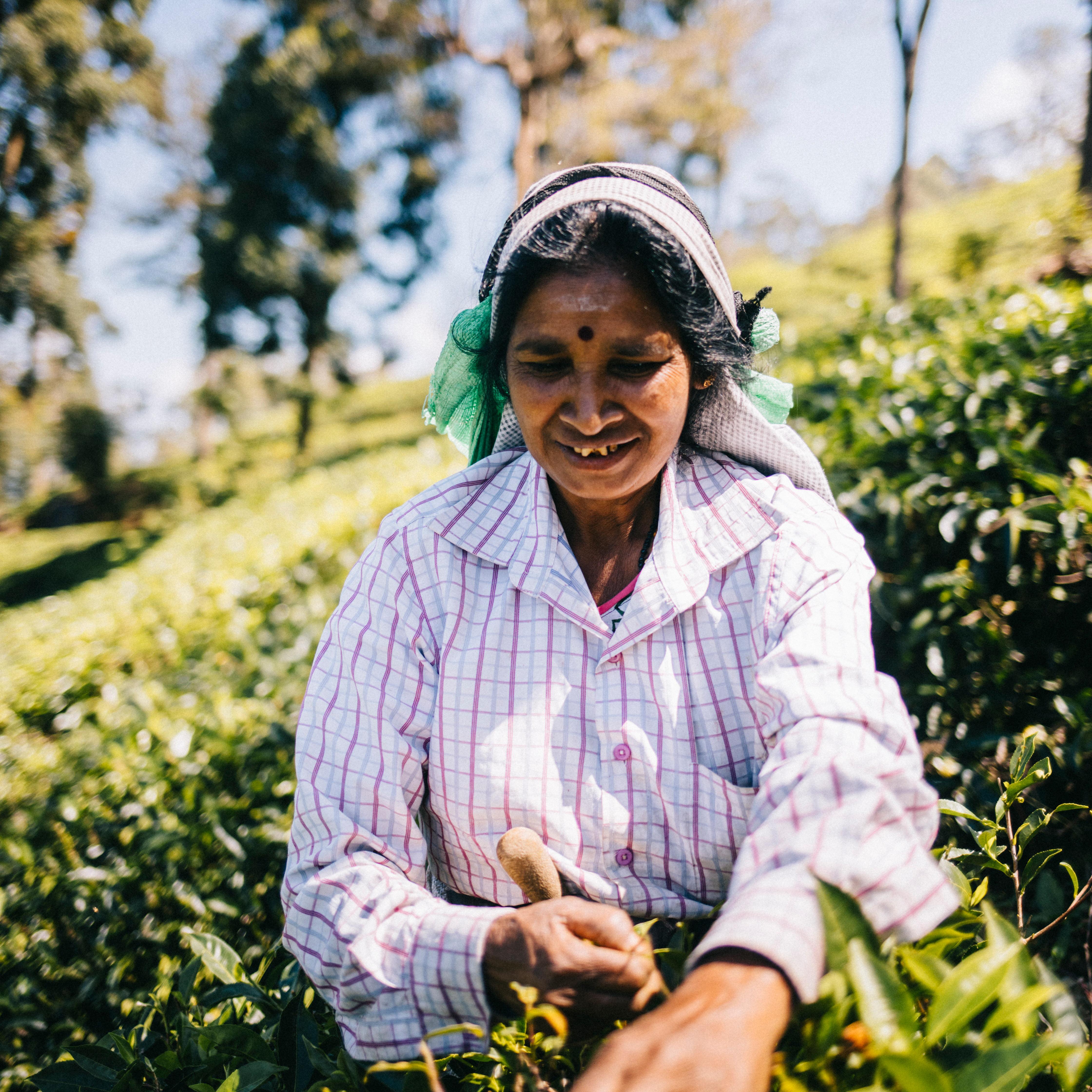 Sri Lanka, Haputale, Cueilleuse de thé @Clara Ferrand