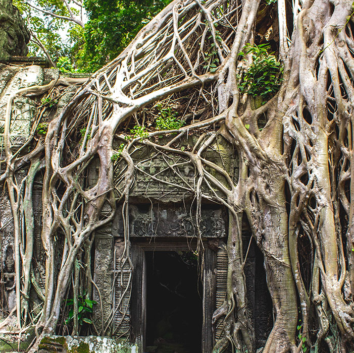 Ta Phrom, Temples d'Angkor, Cambodge