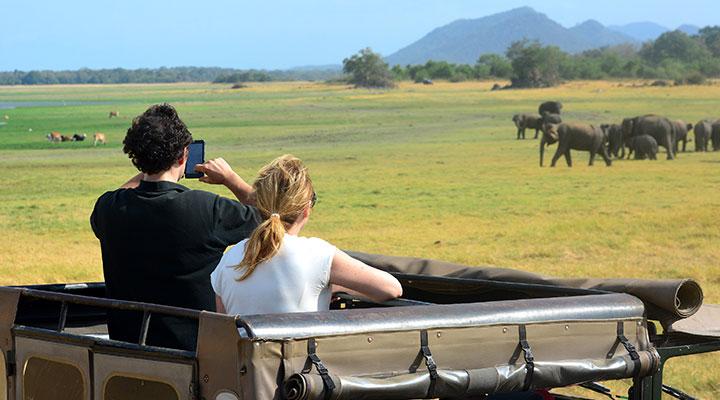 Visite de Polonnaruwa et safari en jeep dans le parc de Minneriya