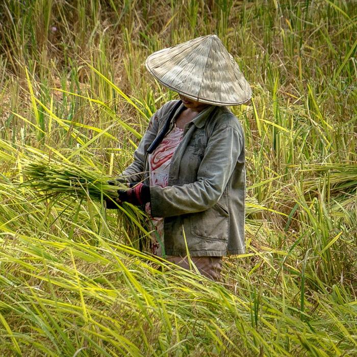 séjour chez l'habitant vietnam