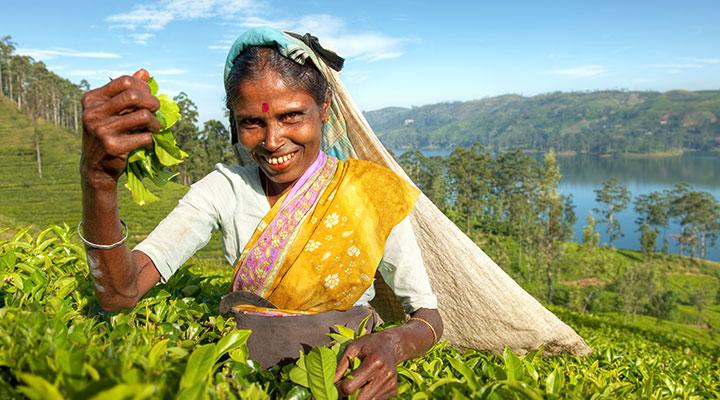 Randonnée dans les montagnes centrales, entre cultures, forêts, rizières.
