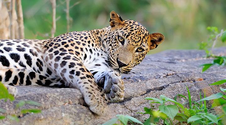 Safari au parc de Wilpattu et balade a Anuradhapura