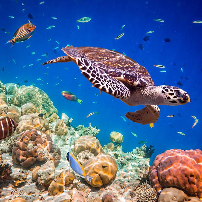 Plongée sous marine, Maldives