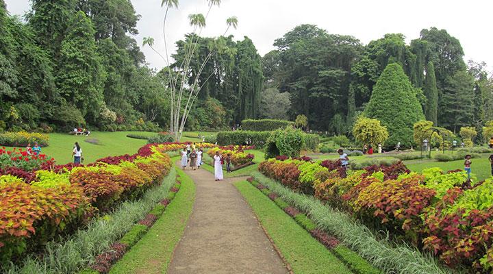 Visite du jardin botanique de Peradeniya sri lanka