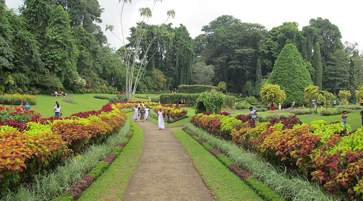 Visite du jardin botanique de Peradeniya