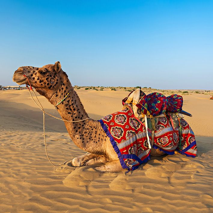 Desert du Thar, Rajasthan, Inde