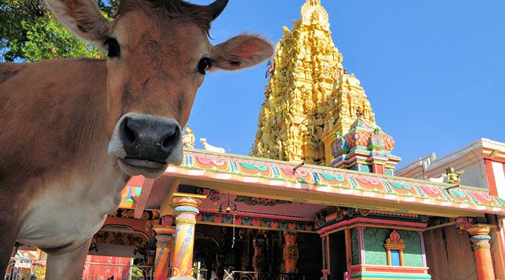 Visite du temple Nallur de Jaffna