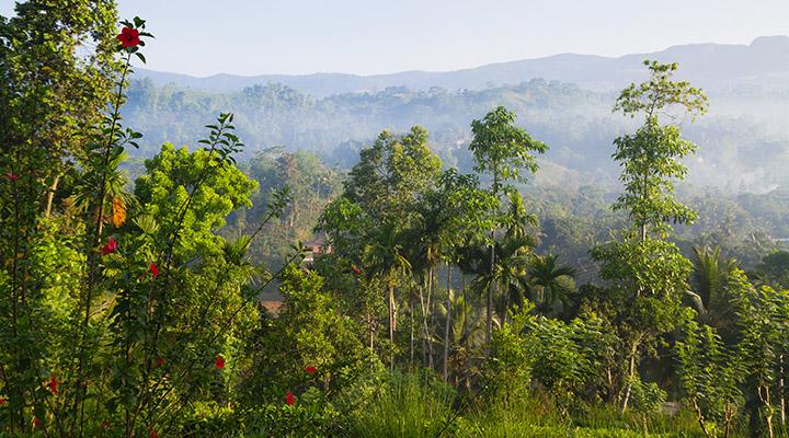 Forêt tropicale de Sinharaja