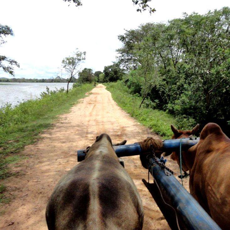 Balade, Char à bœufs, Hiriwaduna, Sri Lanka