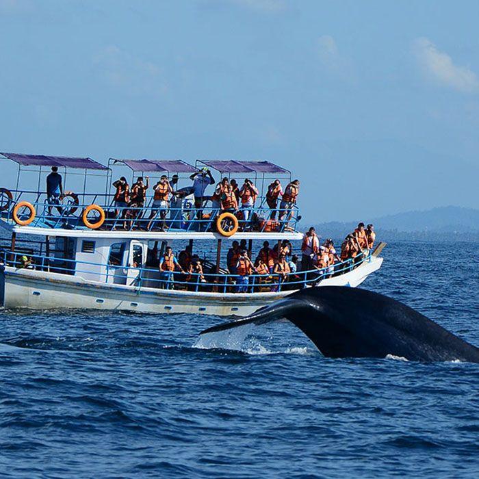 Sri Lanka, observation, baleines, dauphins