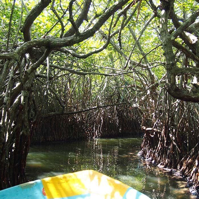 Bateau, Mangroves, Rivière Madu Ganga, Sri Lanka