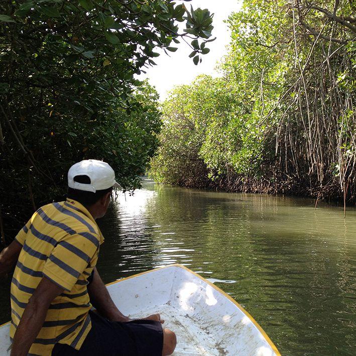 Bateau, Mangroves de Bentota, Sri Lanka