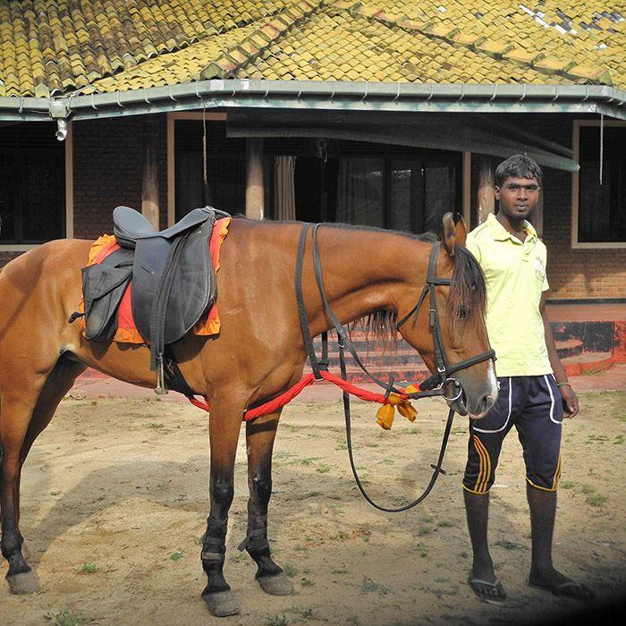 Chevaux, Tissamaharama, Sri Lanka