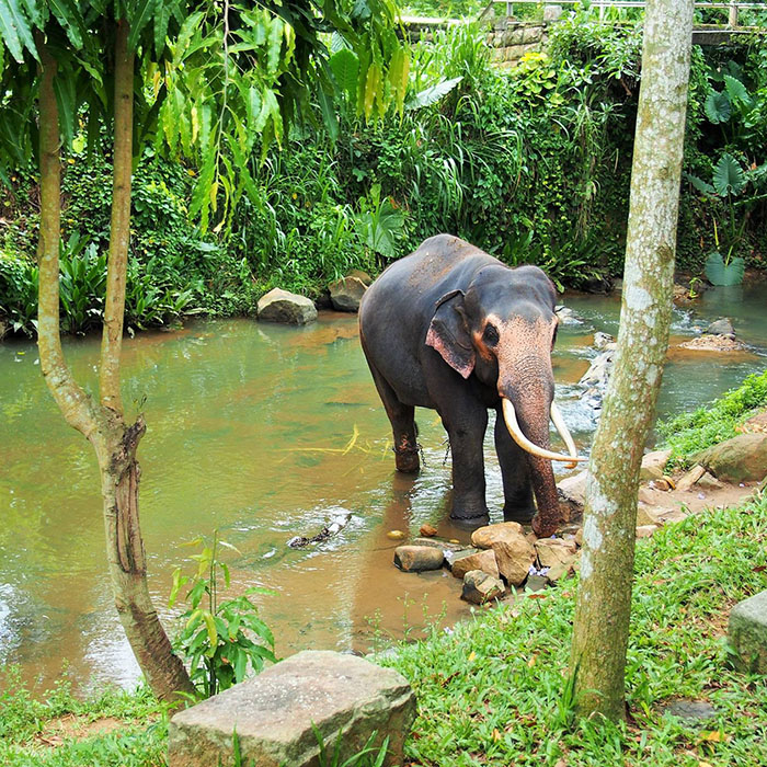 Millenium Elephant Foundation, Sri Lanka
