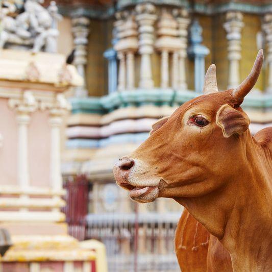 Temple, Jaffna, Sri Lanka