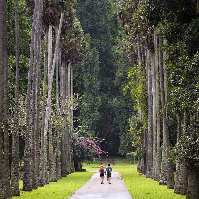 Jardin botanique, Peradeniya, Kandy, Sri Lanka
