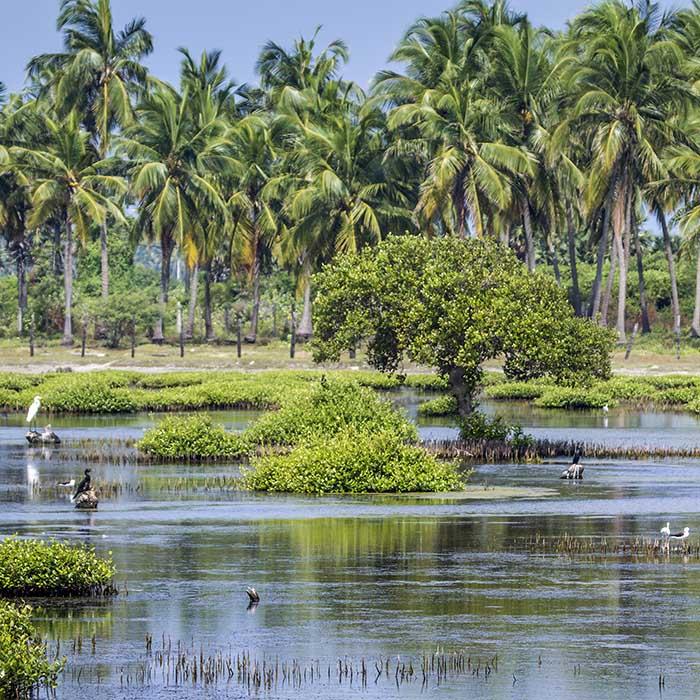 Lagon, Kalpitiya, Sri Lanka