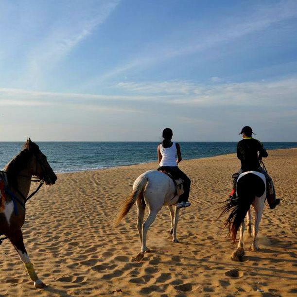 Chevaux, plage, Kalpitiya, Sri Lanka