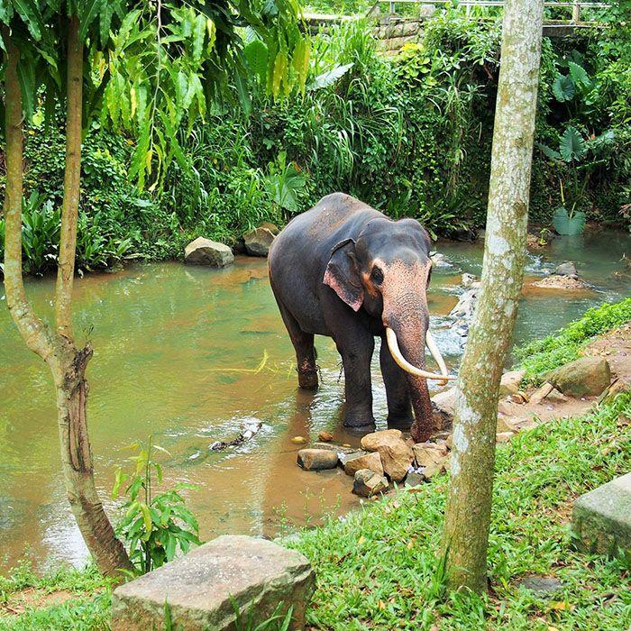 Sri Lanka, Millenium Elephant Foundation
