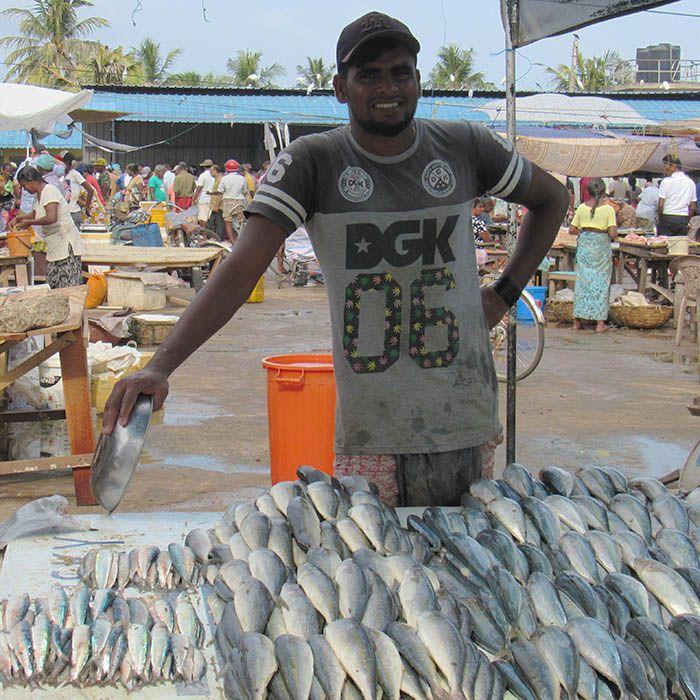 Marché, poissons, Negombo, Sri Lanka