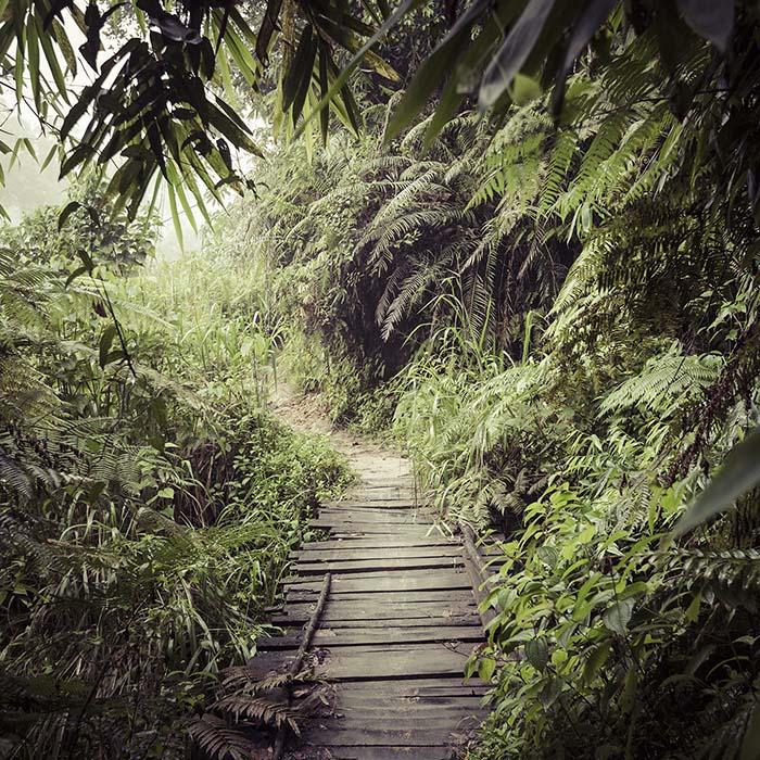 Randonnée, forêt de Sinharaja, Sri Lanka
