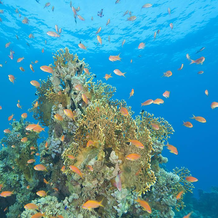Snorkeling, Pigeon Island, Trincomalee, Sri Lanka