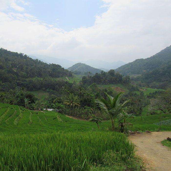 Sri Lanka, Plantations thé, Paysages
