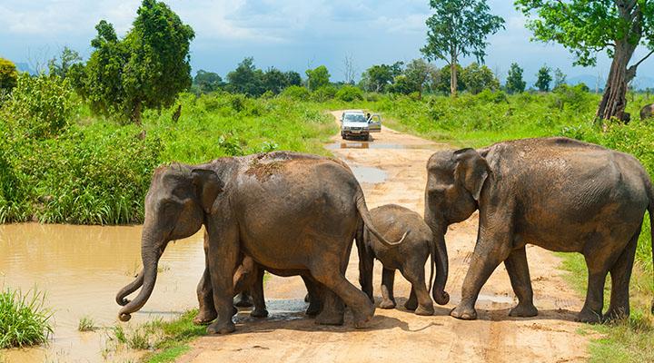 Parc national d'Uda Walawe, Sri Lanka
