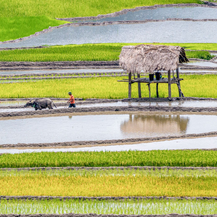 Vietnam, Pu Luong, réserve naturelle