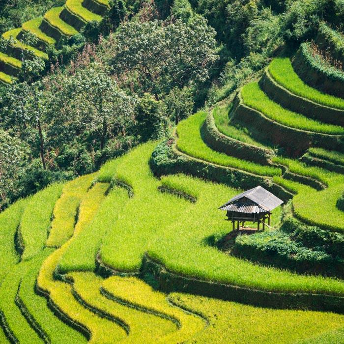 Vietnam, Sapa, étendues, Rizères