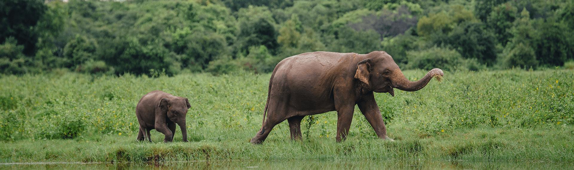 Circuits nature et vie sauvage en Asie