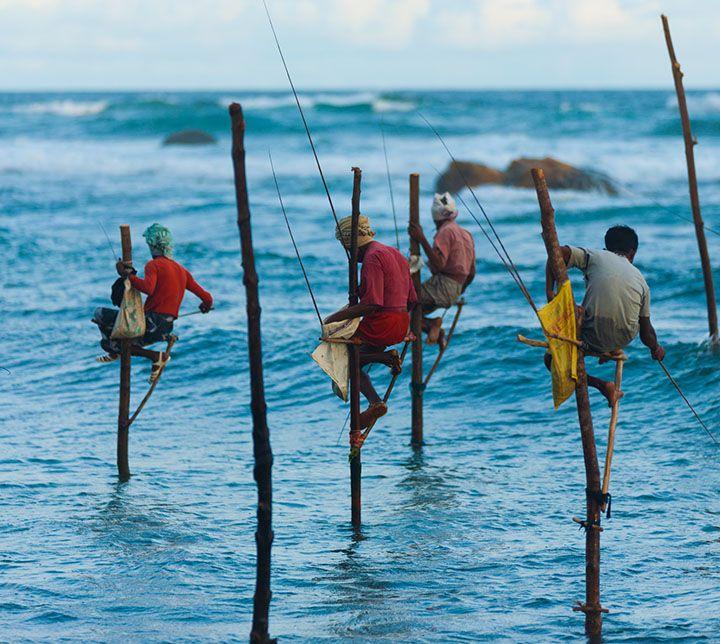 Pêcheurs sur échasses, Weligama, Sri Lanka