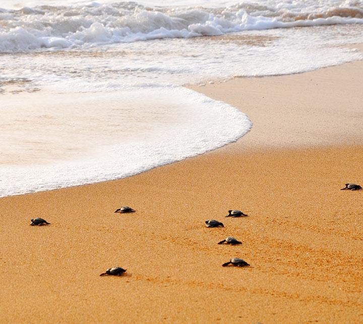 Circuit nature & vie sauvage au Sud du Sri Lanka