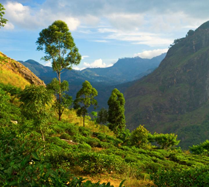Découverte du centre du Sri Lanka
