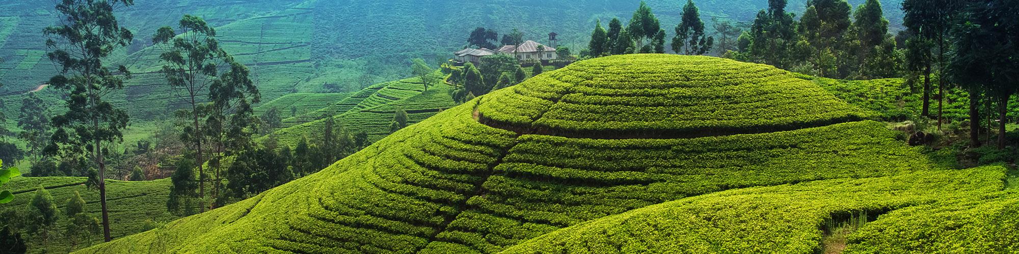 Circuit détente, culture et nature à Sri Lanka