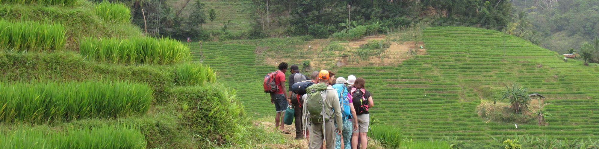 Sri Lanka, Montagnes, Knuckles Range