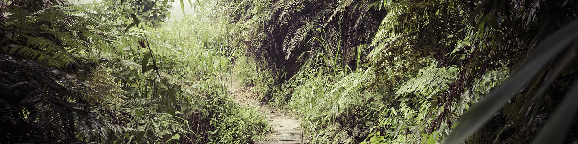Forêt tropicale, Sinharaja, Sri Lanka