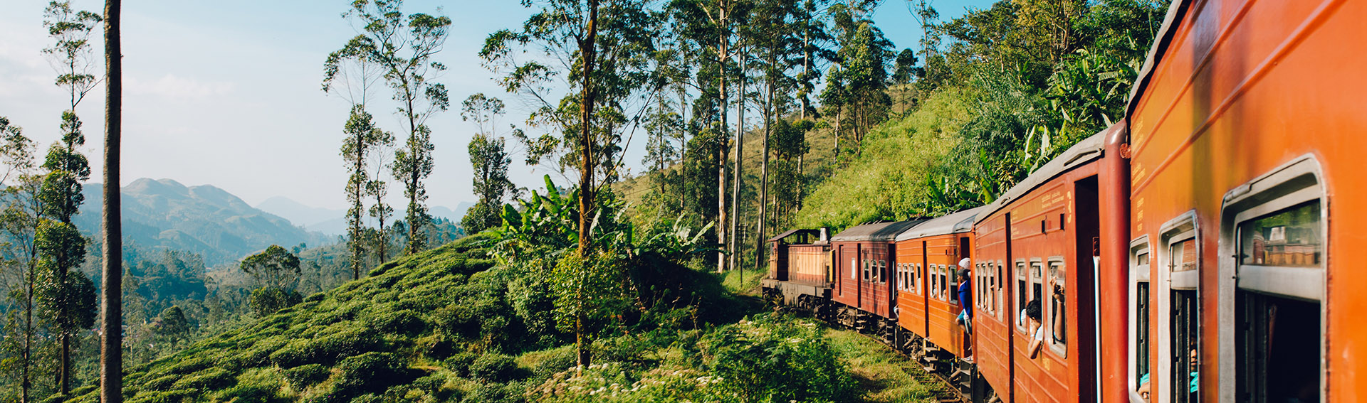Sri Lanka, voyage en train, plantations de thé