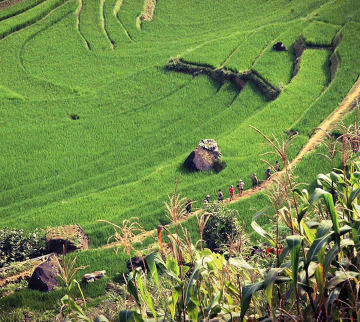 Randonnée, rizières, Vietnam