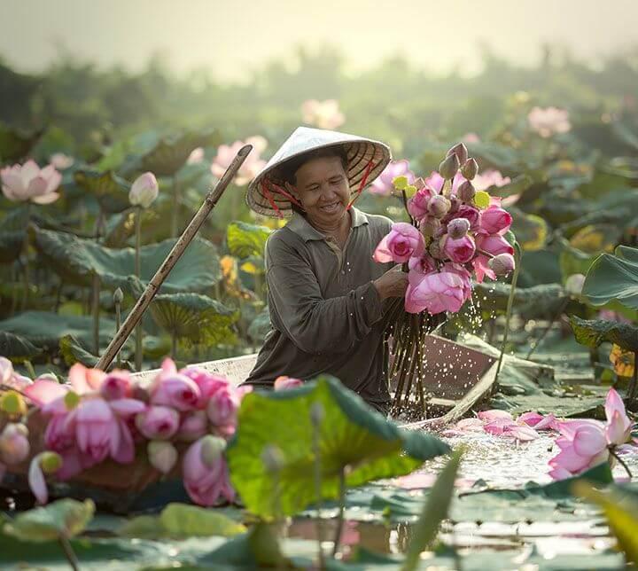 Vietnam, Fermier, Lotus