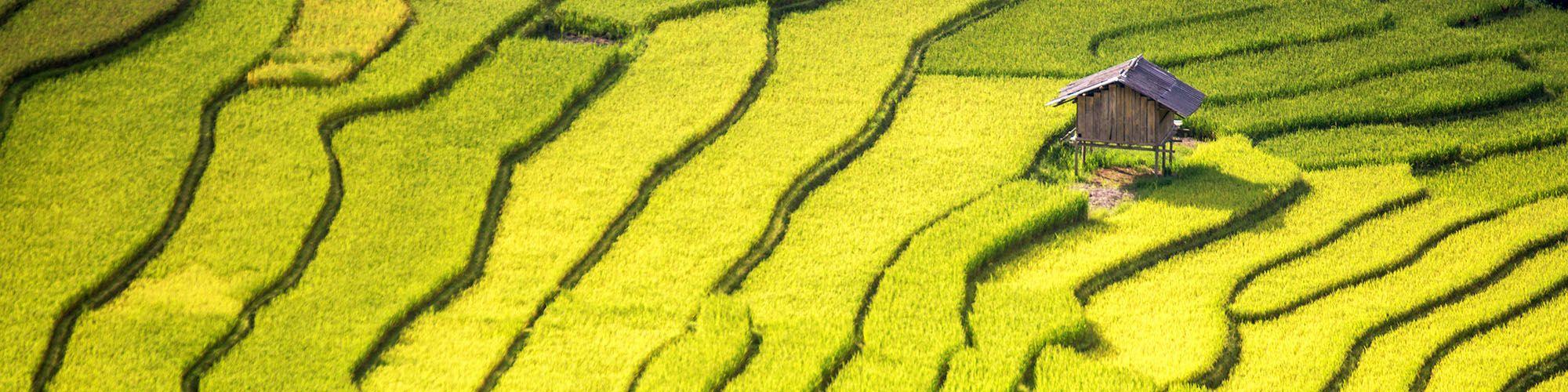 Vietnam, Plantations de riz, Paysages, Nord