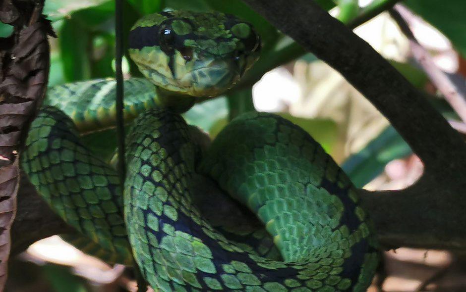 forêt tropicale de Sinhajara Sri Lanka
